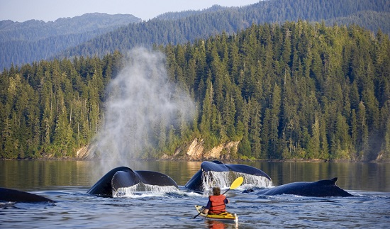 Kayaking with Whales (Alaska)
